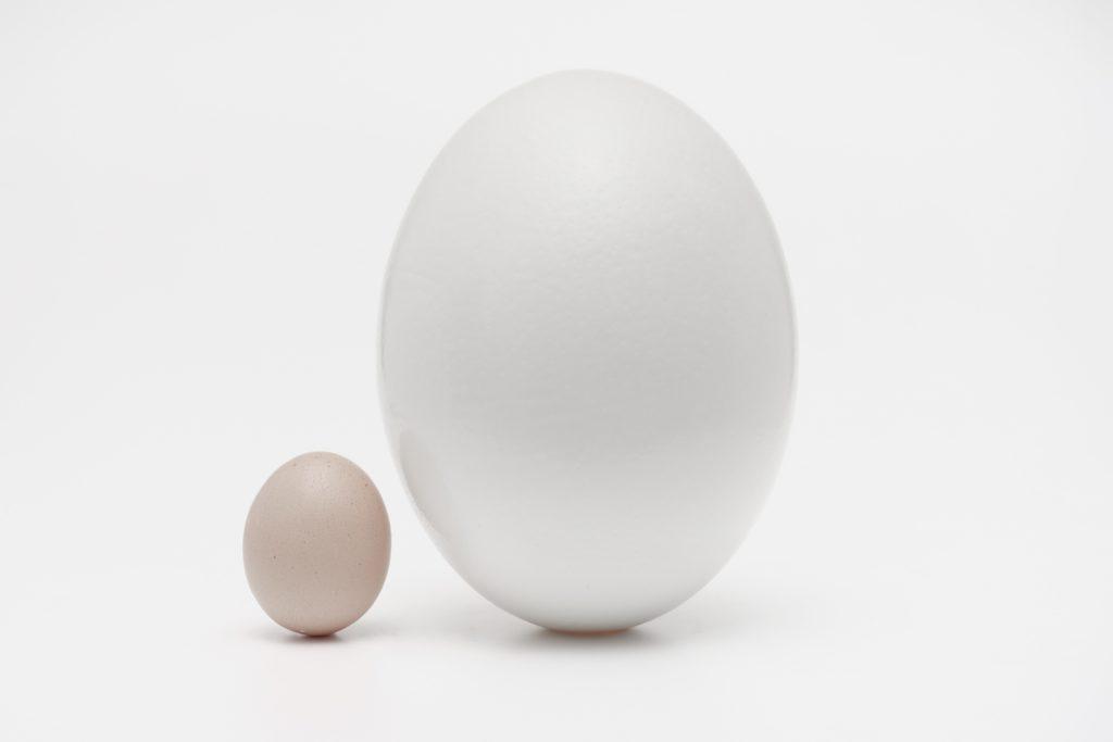 立って並べられた2つの卵